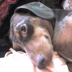 What is better than a single dachshund? I love dachshunds