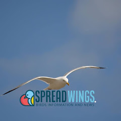 spreadwings