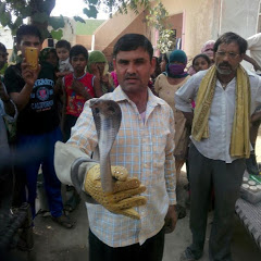 Snake man Haryana Satish kumar