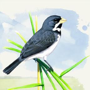Pássaros Cantando Oficial