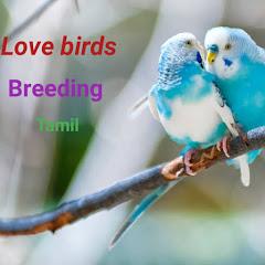 love birds breeding tamil