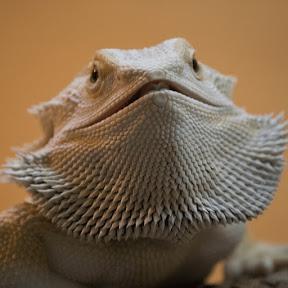 short chubby neckbeard