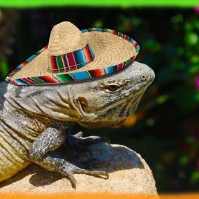 Tijuana Iguana