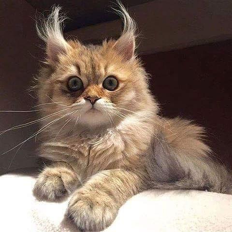 #hihankis #animals #cat #животные #кошка #кошки