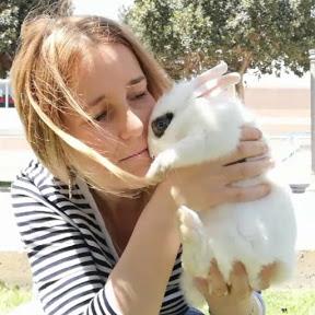 Virales De Conejos
