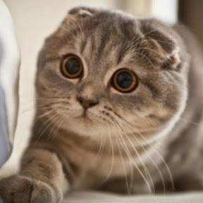 Kucing Lucu Ria
