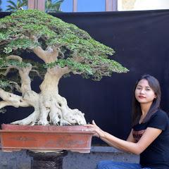 Istana bonsai Bali