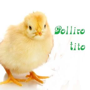 Pollito Tito