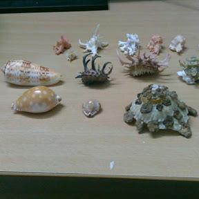 chia sẻ vỏ ốc biển