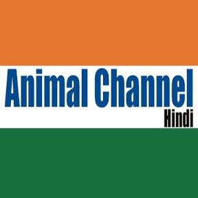 Animal Channel Hindi