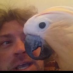 Pebble The Crazy Cockatoo