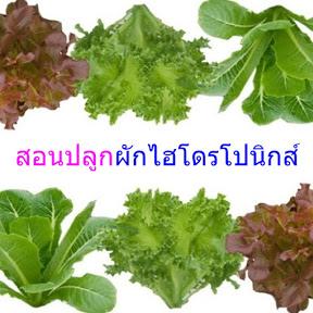 สอนปลูกผักไฮโดรโปนิกส์