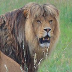حيوانات افريقيا