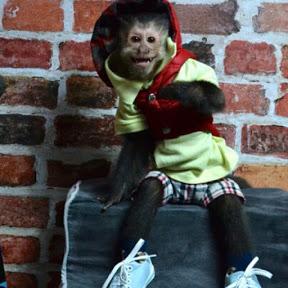 Macaco Skinner