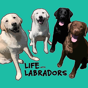Life With Labradors