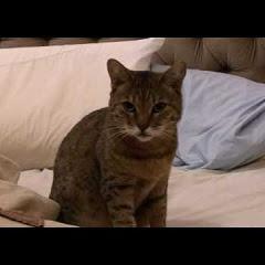 The Cat Behaviour Channel