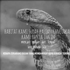 Bocil Reptile