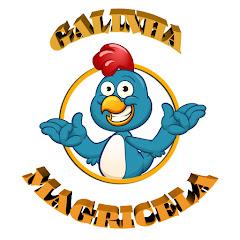 Galinha Magricela