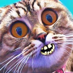 Cat vs Kati