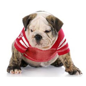 Cachorro NCAAF