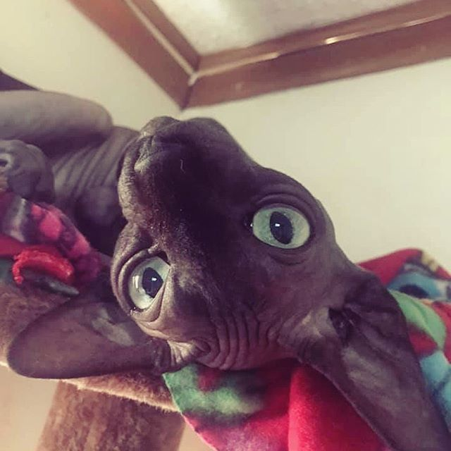 Cat or bat? 🦇