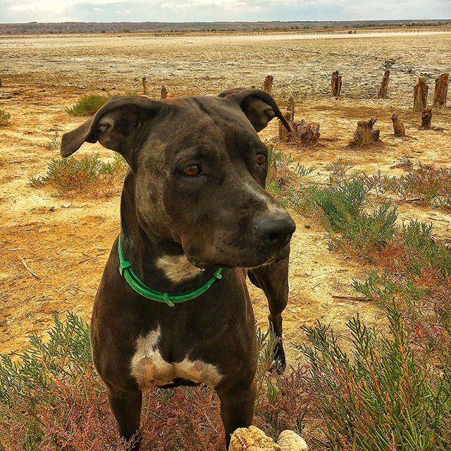 Степной рейнджер , спешит на помощь  #канни#каничка#собака#собаки#собакиулыбаки#собакины#собакигуляки#степнойпёс#dogs#dogsofinstagram#dogstagram#dogsbeingbasic#dogs_of_instagram#dogs_of_world#dogsofinsta#dogsofinstaworld#dogs🐶#dogslife🐶#dogstyle#natura#naturalbeauty#natural#natura_love_