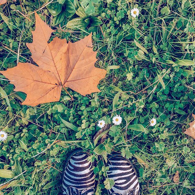 Коротко о моих планах на осень 🍂 ⠀ 🍁 Наслаждаться осенней природой. ⠀ 🎃 Есть свои любимые тыквы. ⠀ 🙃 Не сойти с ума от кучи дел, всяческих переживаний и волнений. Поменьше нервничать и научиться отпускать ситуацию. ⠀ 📚 Прочитать наконец книжки со второго фото и не только. ⠀ #travel #travelgram #wanderlust #globetrotter #tasteoftravel #beautifuldestinations #worldtravel #worldtravelpics #worldtraveler #travelblog #travelblogger #traveltheworld #instatravel #travelphotography #travelgram #travelholic #drmartens #drmartensboots #autumn #pumpkins #_readingbooks #bookstagram #books