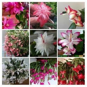 Amor por flor de maio