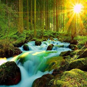 cuộc sống thiên nhiên