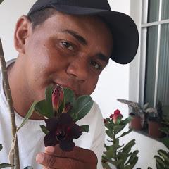Rosa do deserto Claudison Silva