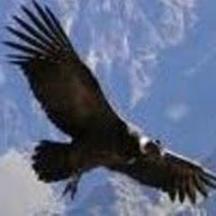 Condor C