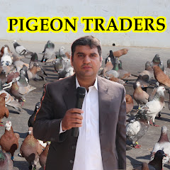 Pigeon Traders