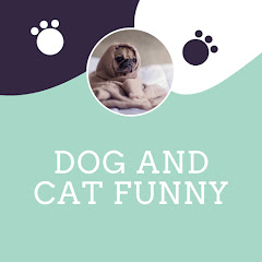 Dog And Cat Funny