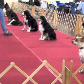 Obedience Trials - Topic