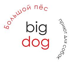 Помощь бездомным собакам bigdog_ekb