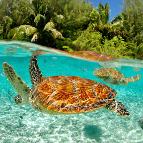 Discover the South Pacific