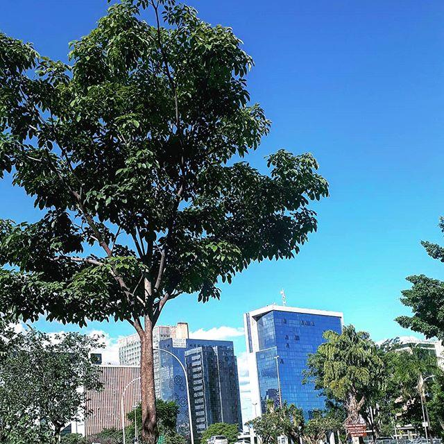 O+ que brisa boa 🎶  brasilia #natureza