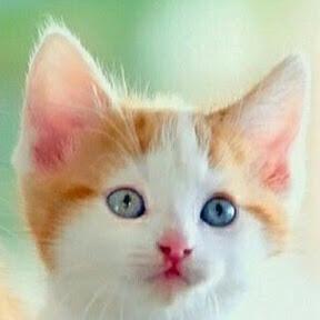 Eibenpfote Warrior Cats