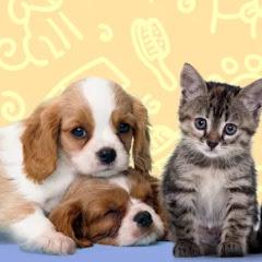 Pet Training寵物訓練營