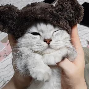 째리치치's CAT LIFE