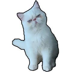 솜털친구들fluffycat