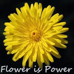 Flower Is Power