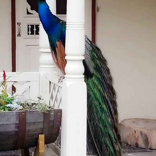 Her majesty, the queen. #nofilterneeded #bird #birds #birdsofinstagram