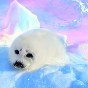 Cute little seal Yt