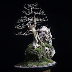 Carving Bonsai