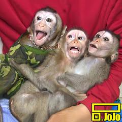 Monkey Baby JoJo