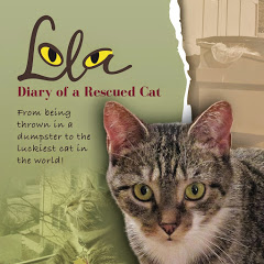 Lola The Rescued Cat