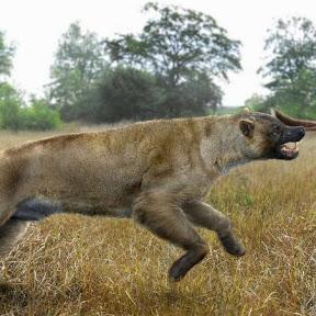 goombasaurusrex