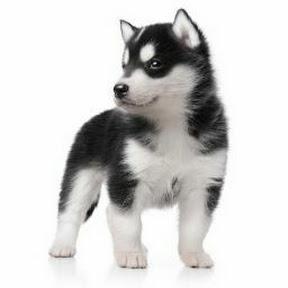 WAONの犬