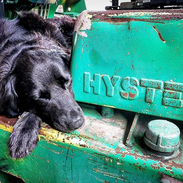 Hyster came by his name honestly ❤️ #hyster #forklift #bestpup #snoozin